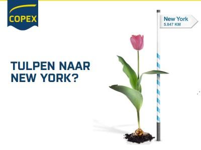 Tulpen naar New York?
